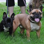 Frenchies 0146 - Happy Customers