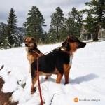 Mountain Dogs by John Bradford 051 - Happy Customers