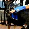 one piece interior compartment 4734a - Service Dog Cape/Vest