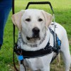 COMET J. Reynolds  - Mobility Support Harness™ for brace and balance stability assistance