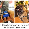 MSH reflective with and without flash - Mobility Support Harness™ for brace and balance stability assistance