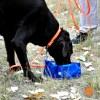 WYATT with portable water bowl brahma martingale and brahma long line - Portable Zip Water Bowl