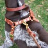 Top of CCH on ENZO 0619 - Connected Control™ Harness: a Leather no-pull dog walking harness (2-point, front-clip design)