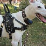 deedee lim greyhound - Service Dogs in Action