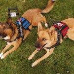 dsc 0852 - Service Dogs in Action