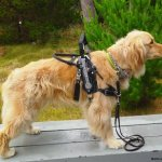 easton hero - Service Dogs in Action