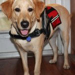 josie nancy smith 003 - Service Dogs in Action