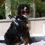 journey montero spain - Service Dogs in Action