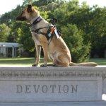 juno hembree devotion - Service Dogs in Action