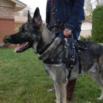 sunny in bah 1094 - Service Dogs in Action
