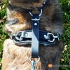 Top of hanress with Spring Snap Clips 1853 - Tracking / Agitation Harness for working dogs (padded, 2-latch, heavy-duty leather)