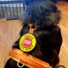 badge on harness 133515 - STOP Sign Leash Wraps