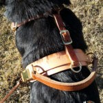 Measuring for your custom harness