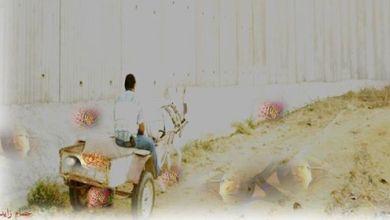 Photo of المفكر عصام زايد يكتب : جدار الجهل معول هدم حضارتنا