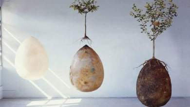 Photo of إختراع ايطالي يحول جثة الإنسان بعد موتة إلي شجرة