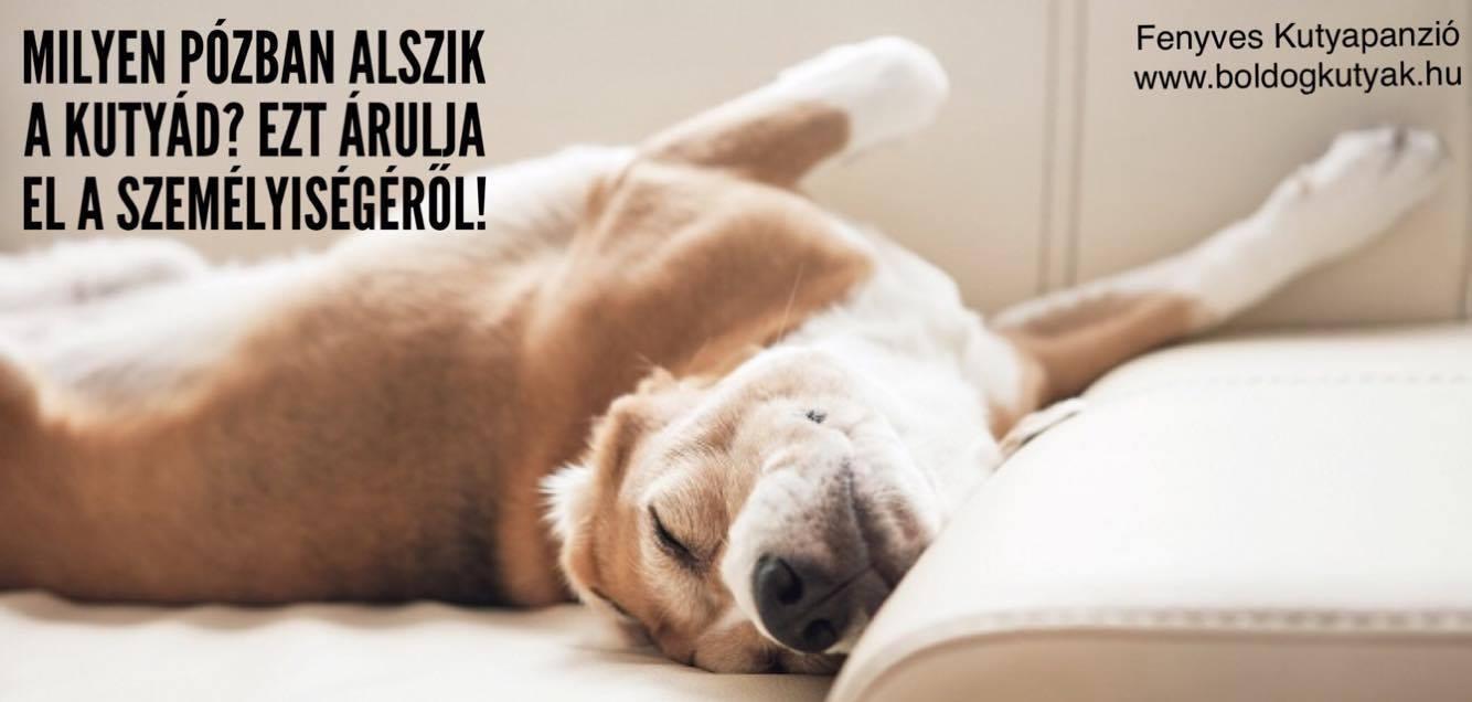 Milyen pózban alszik a kutyád?