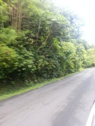 texture of the highway through the forest-land (2)