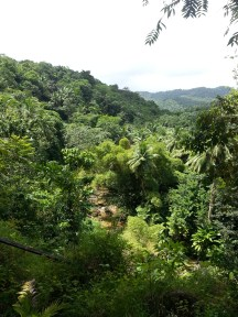 Zip Lining in Dennery (20)