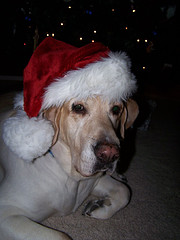 Carla in a Dog Santa Hat