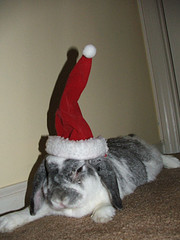 Carla in a Rabbit Santa Hat