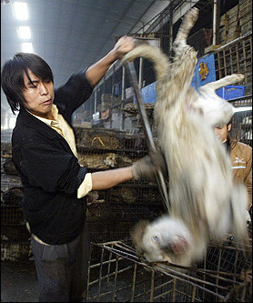 Eating a Dog in China
