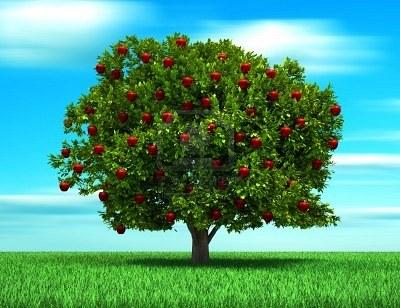 Árbol de la Educación Ambiental