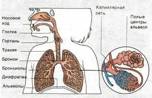 Воспаление верхних дыхательных путей причины поражения