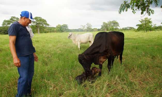 En tierras restituidas de El Carmen de Bolívar, La Negrita es el símbolo del resurgimiento del campo