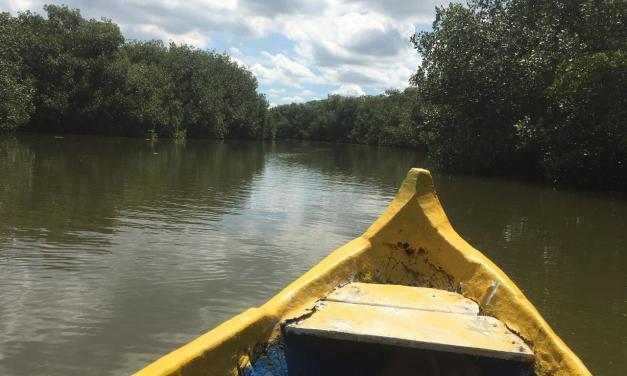 Viajando Sin Pasaporte a: Manglares de La Boquilla