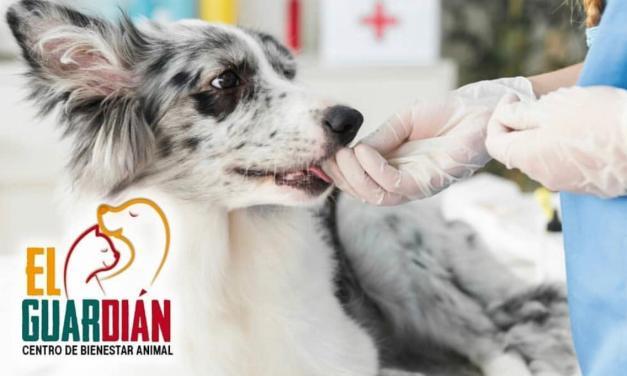 El Guardián invita jornada de salud y recreación animal gratuita