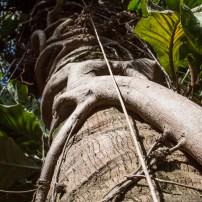 Parasite plant