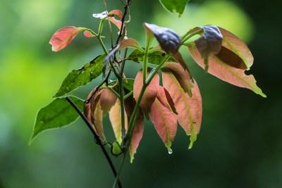 Blade med såkaldte drypspidser