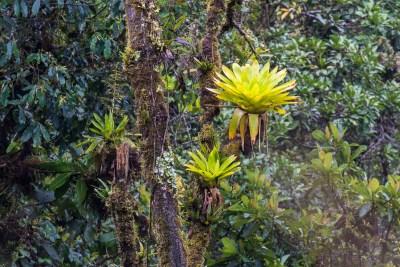 Mange arter lever kun i tågeskoven