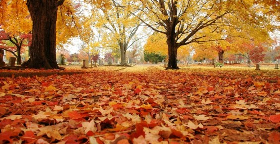 outono-1-780x400