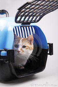 cat-transport-box-10259865