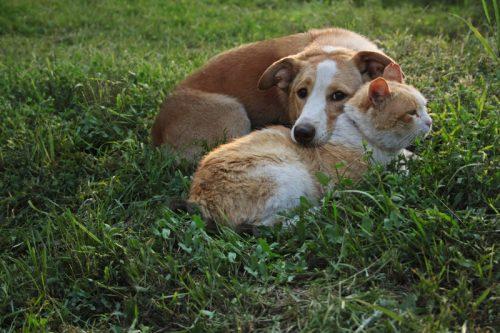 Anjing dan kucing di atas rerumputan