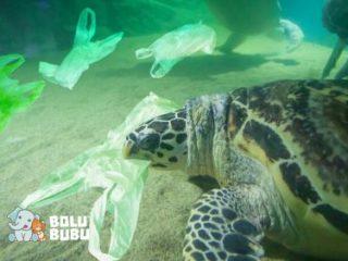 mengapa hewan laut memakan plastik