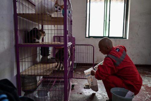biksu memberi makan hewan liar