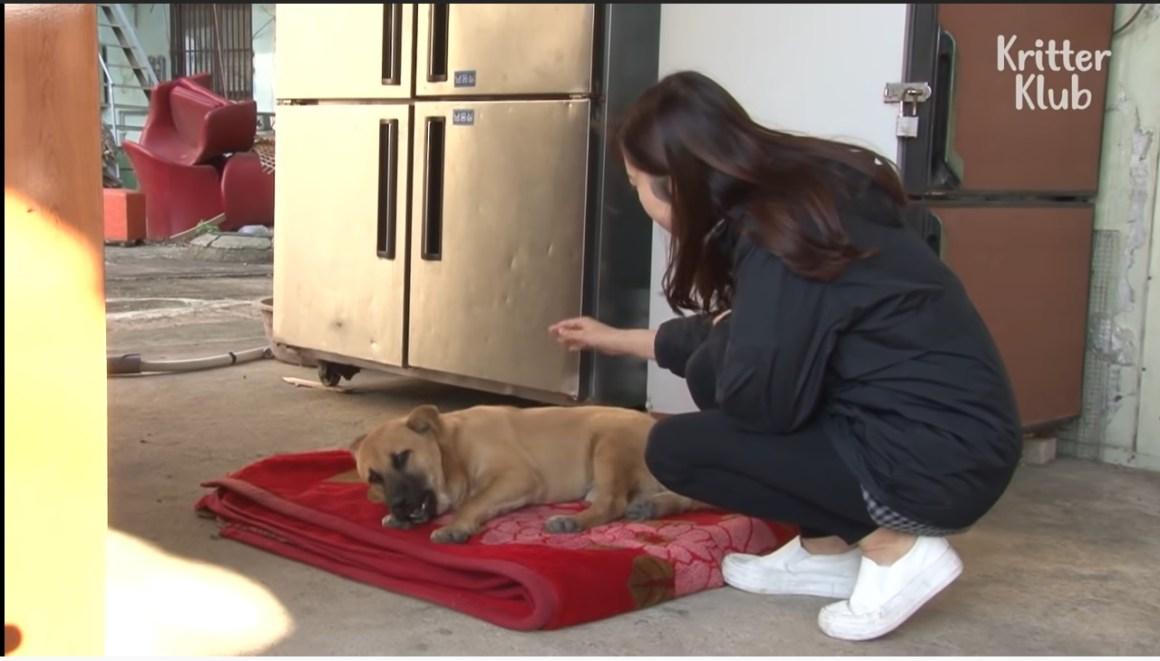 menyelamatkan anjing terlantar
