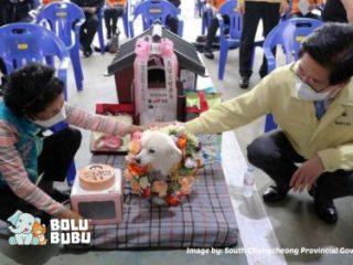 anjing kehormatan korea selatan