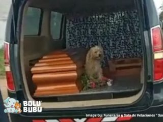 anjing loyal