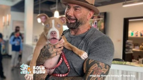 dave bautista adopsi anjing