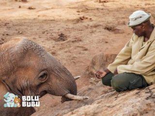 gajah dan pengasuhnya