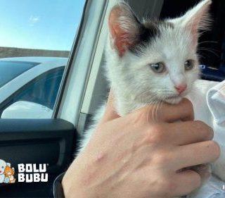kucing kecil terjebak di mesin mobil