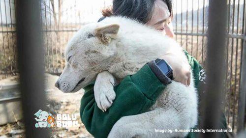 menyelamatkan anjing dari peternakan