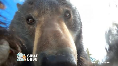 beruang selfie