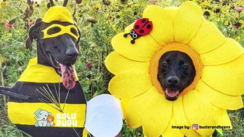 kostum unik untuk anjing adopsi