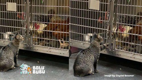 kucing pemberi kenyamanan