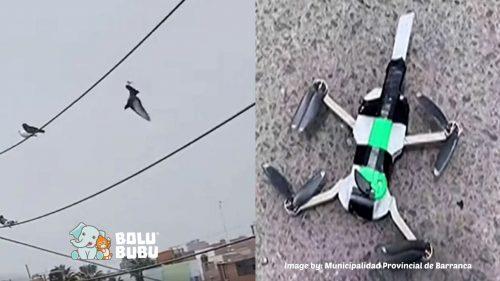 menyelamatkan burung menggunakan drone
