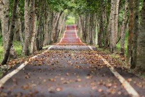 woodland, road, falling leaf
